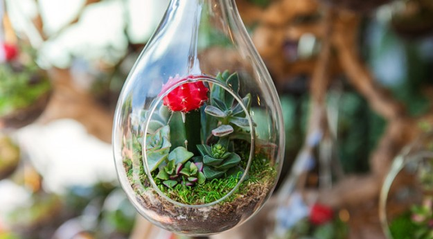 DIY : Réaliser un terrarium soi-même