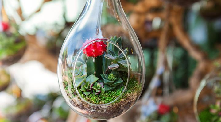 Réaliser soi-même un terrarium - DIY Blog La Foir'Fouille