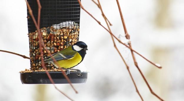 Conseil : Comment aider les oiseaux de l'extérieur en hiver