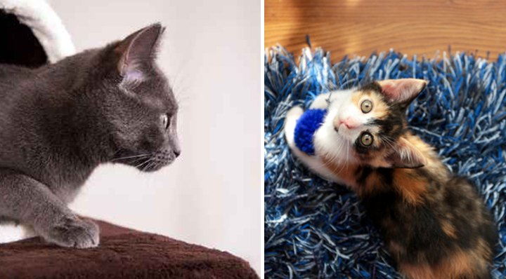 Conseil pour bien accueillir un chat le blog de la foirfouille