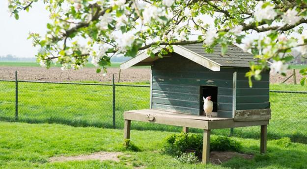 On adore: Installer un poulailler dans le jardin