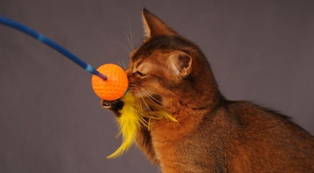 DIY: Réalisez un jouet pour chatunique !