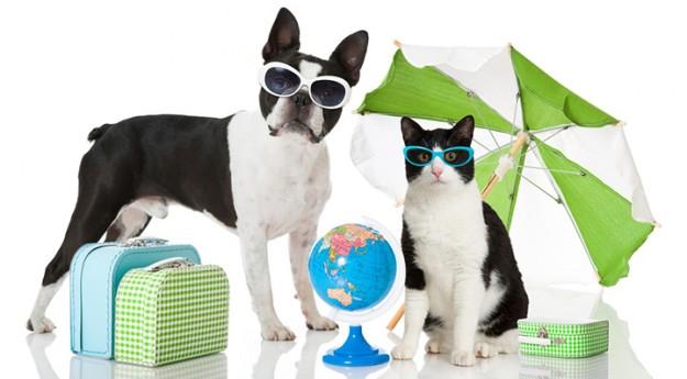 Conseil : Partir en vacances avec son chat