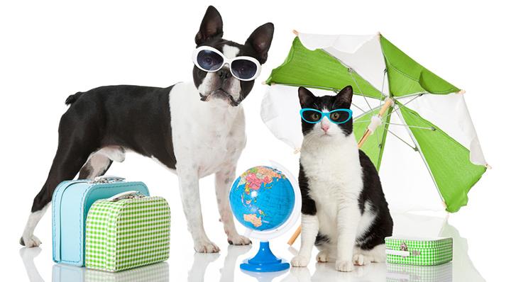 conseil partir en vacances avec son chat. Black Bedroom Furniture Sets. Home Design Ideas
