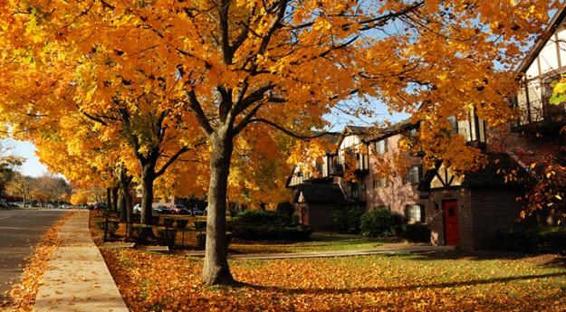 Conseil : Préparer la maison pour l'automne