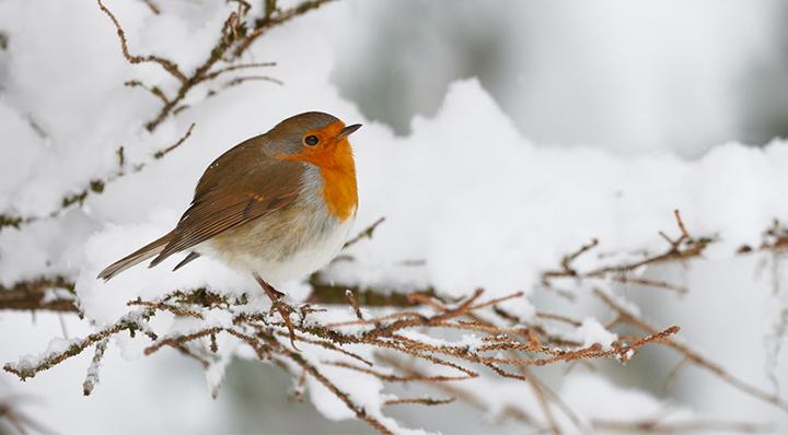 conseils s occuper des oiseaux en hiver blog la. Black Bedroom Furniture Sets. Home Design Ideas