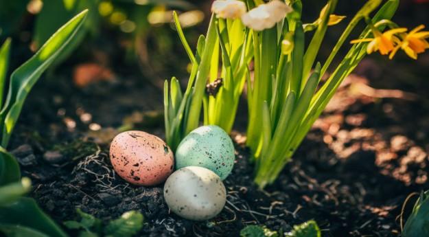 DIY : Planter un œuf cru dans un pot de fleurs