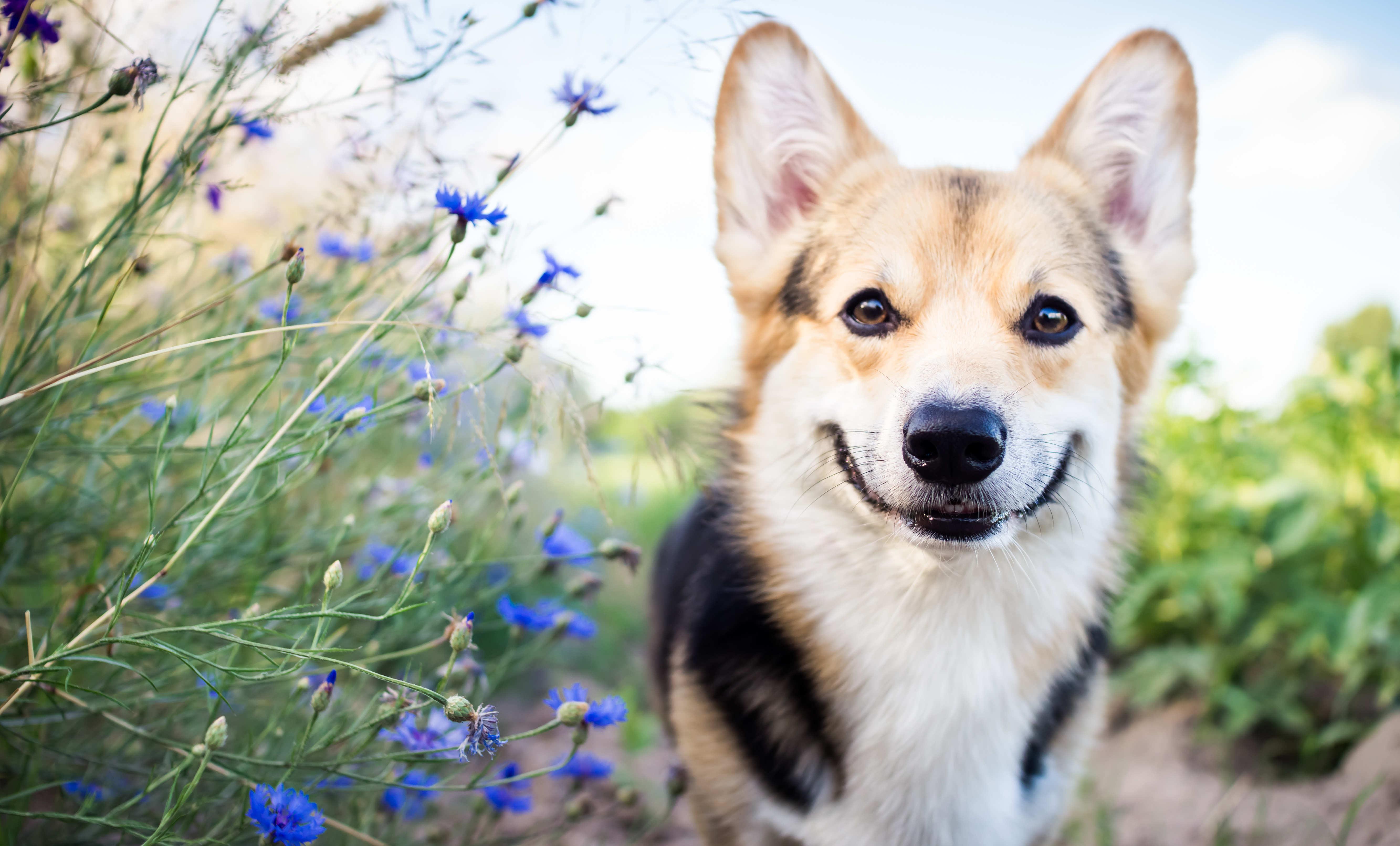On adore - 4 accessoires pour rafraîchir son chien cet été - Blog La Foir'Fouille