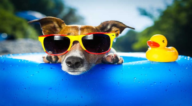 Blog La Foir'Fouille - On adore - 4 accessoires pour rafraîchir son chien cet été - On adore