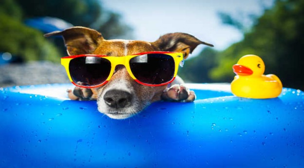 On adore: 4 accessoires pour rafraîchir son chien cet été