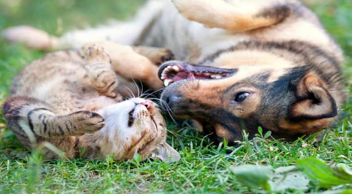 Conseils - Blog La Foir'Fouille - Comment protéger son animal de la chaleur ?