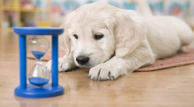 Conseils: 5 jeux pour occuper un animal qui s'ennuie