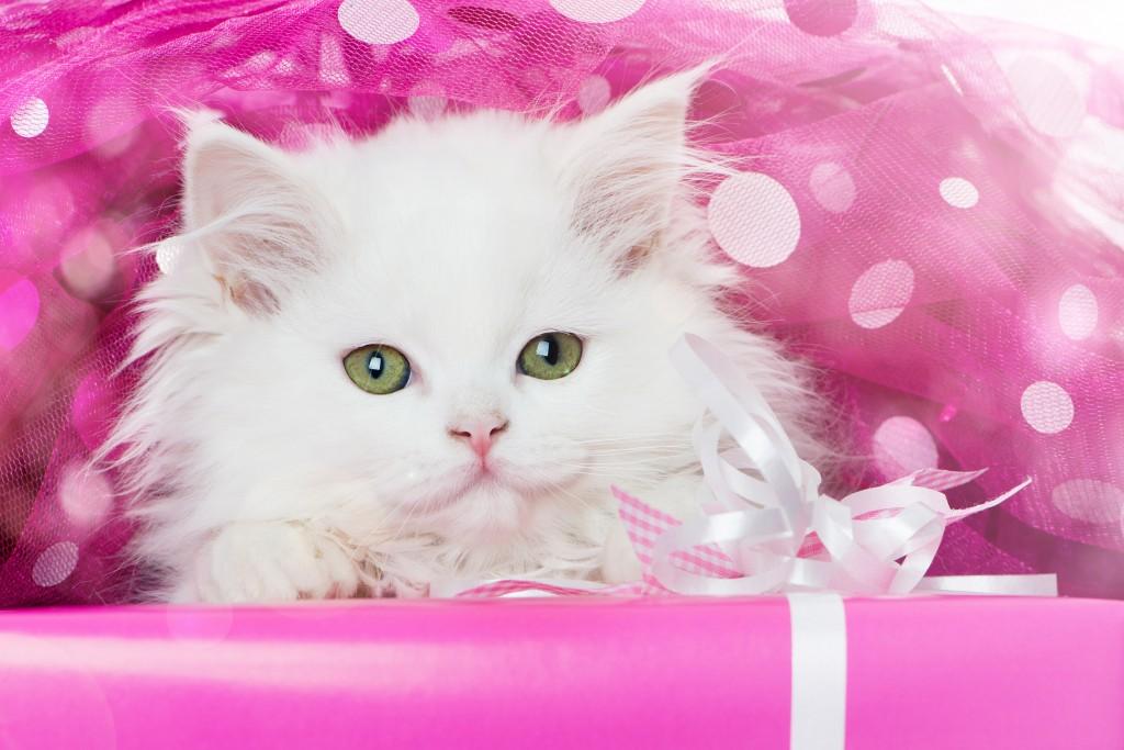 Princesse - On adore - Tout pour gâter le chat-roi !