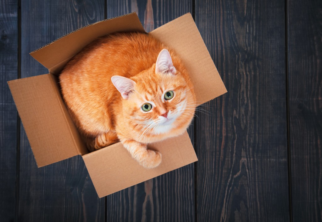 Carton - On adore - Tout pour gâter le chat-roi !