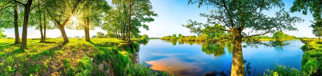 Forêt humide - Conseils - Comment passer un été sans piqûres