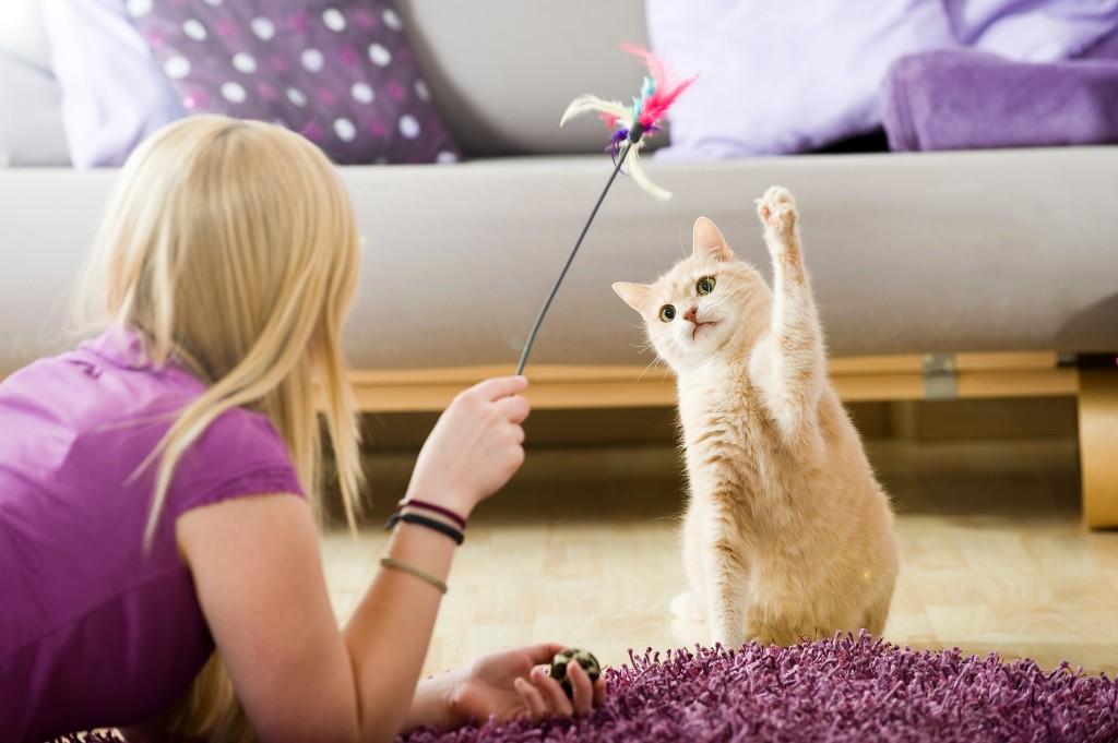 Jeu - On adore - Tout pour gâter le chat-roi !