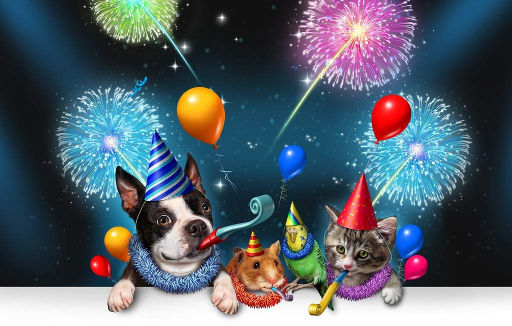 Fête - Conseils - Préparer son animal aux fêtes du 14 Juillet