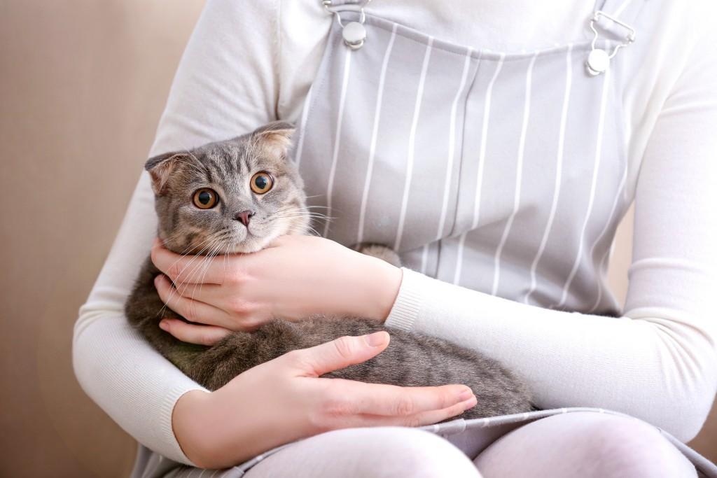 Scared - Conseils - Préparer son animal aux fêtes du 14 Juillet