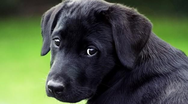Conseils : Préparer son animal aux fêtes du 14 Juillet