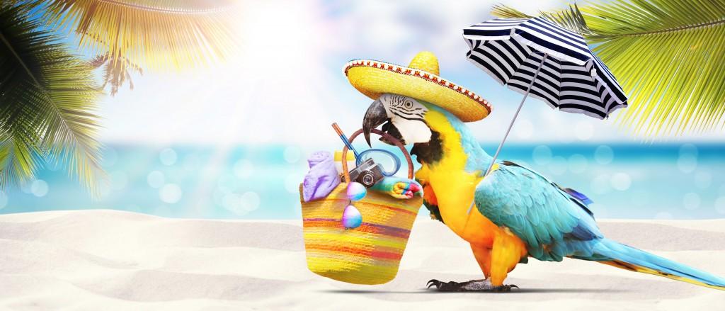 On adore - Perroquet - Ces 5 accessoires qui révolutionnent la plage !