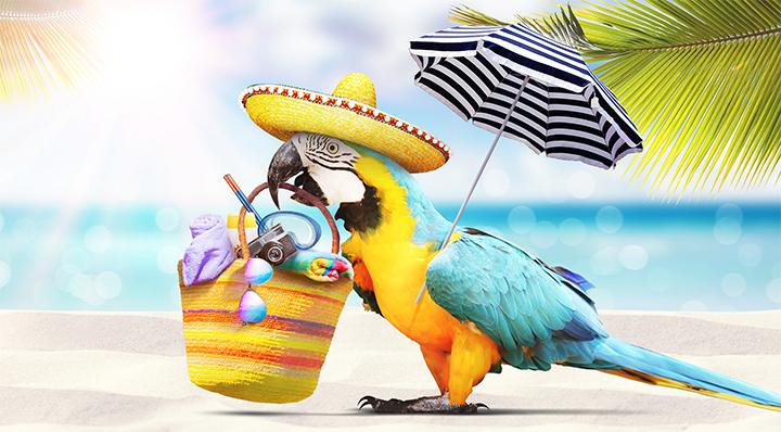 On adore - Ces 5 accessoires qui révolutionnent la plage ! - Perroquet