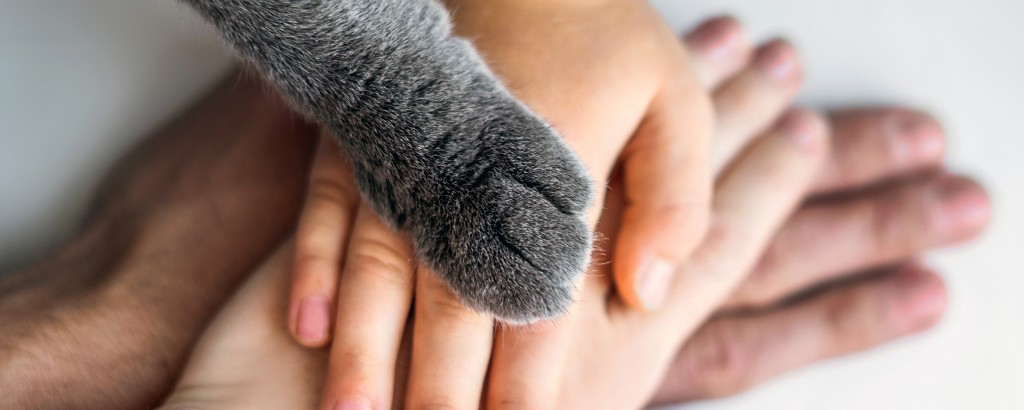Ensemble - Conseils - Préparer son animal aux fêtes du 14 Juillet