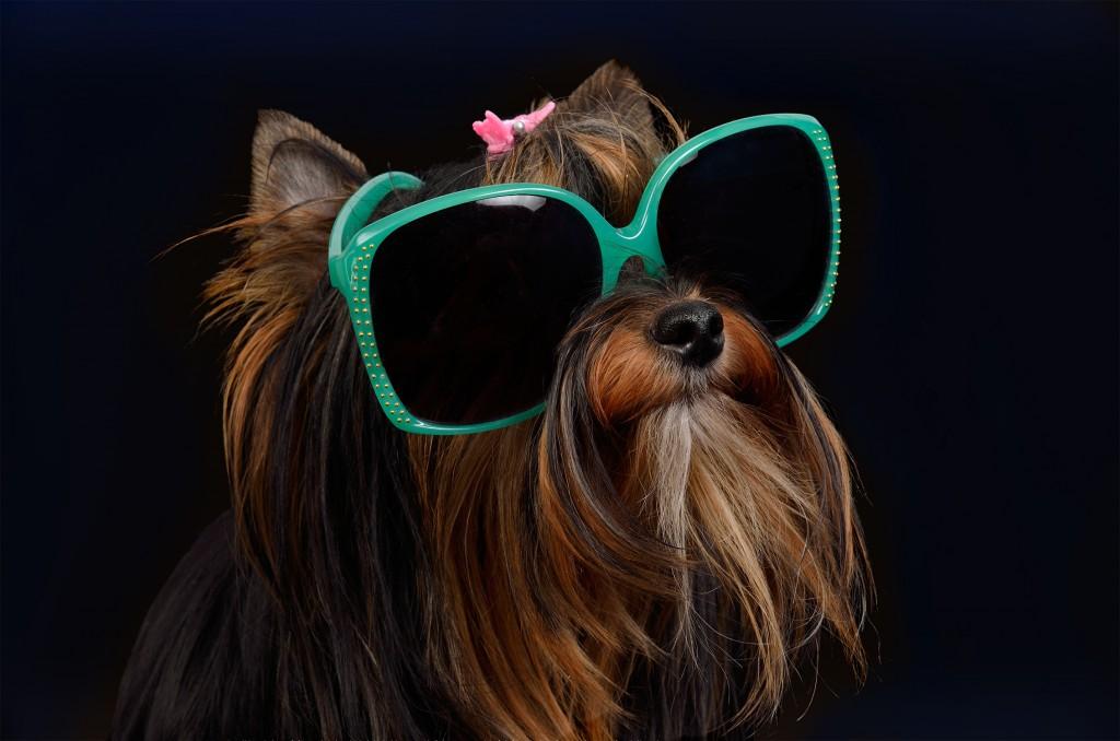 Doggy style - On adore ! - Ces accessoires venus d'ailleurs