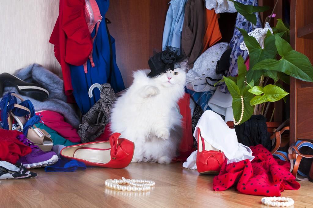 Thug cat - On adore - Les armoires à chaussures de demain... dès aujourd'hui !