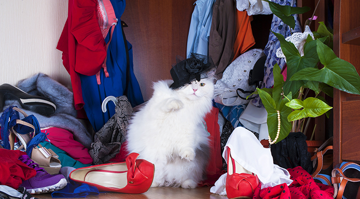 Thug-cat - On adore - Les armoires à chaussures de demain... dès aujourd'hui !