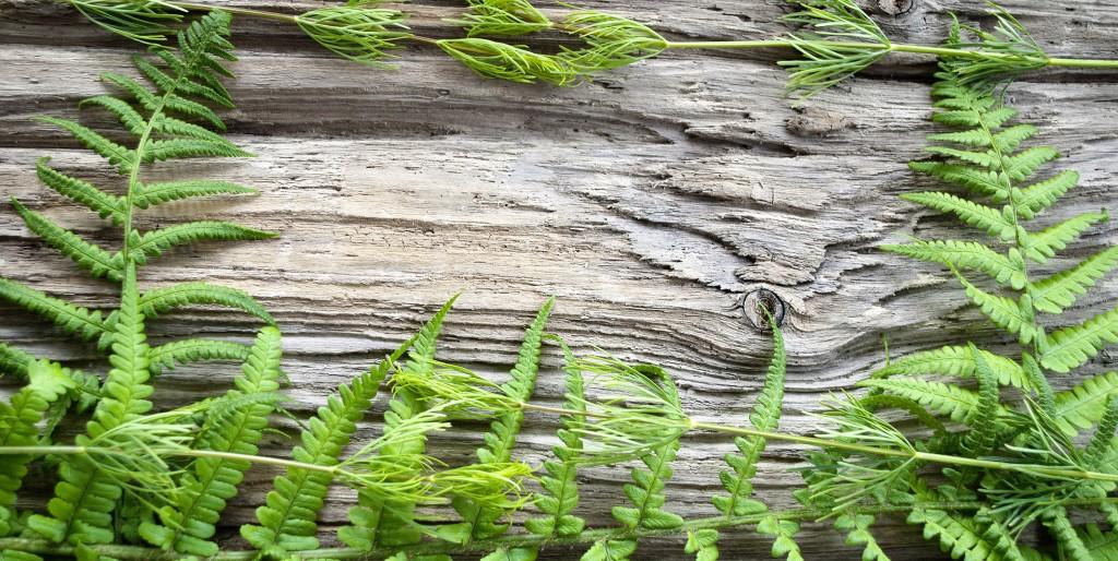 Fougères - DIY - Faire du bois flotté avec des branches fraîches