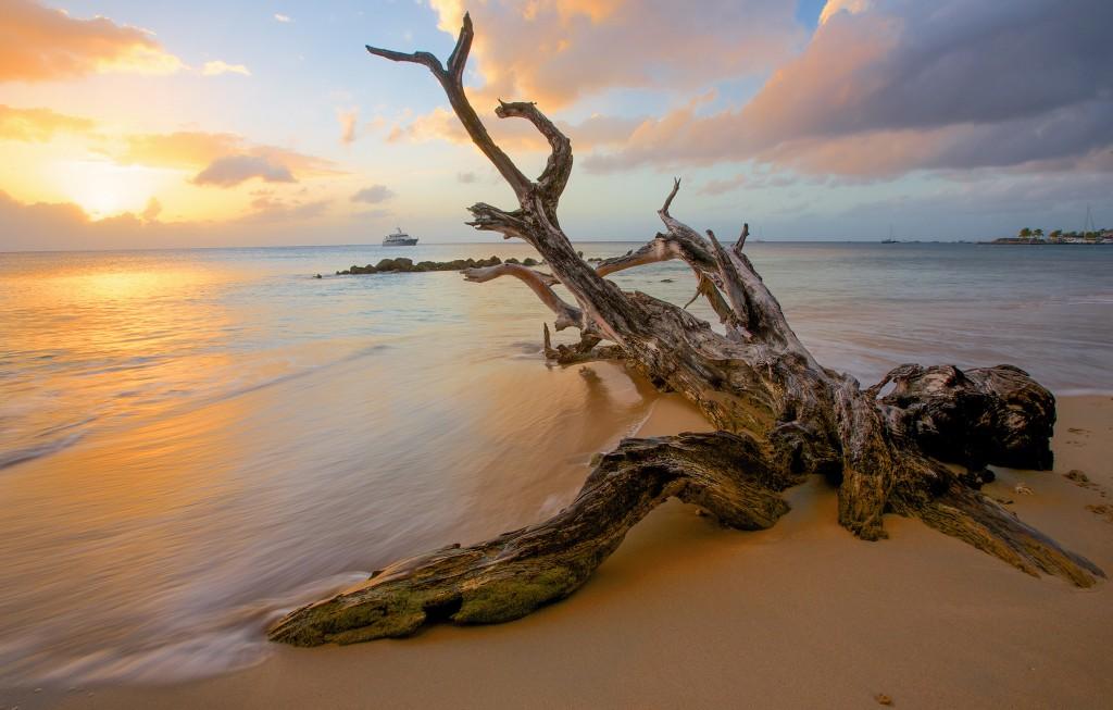 Sunset - DIY - Faire du bois flotté avec des branches fraîches