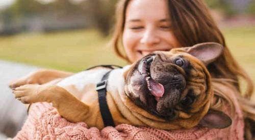 DIY - 3 Jouets pour chien à fabriquer soi-même - Blog La Foir'Fouille
