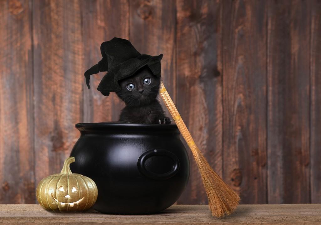 Chat(on) noir -Potions - DIY - Préparer des potions de sorcière