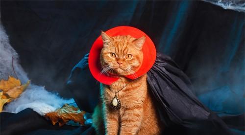 Vampire cat - DIY - 5 Masques d'Halloween à colorier