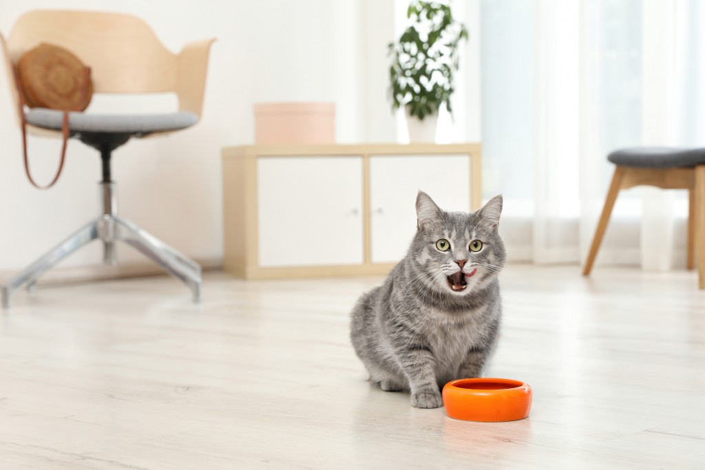 Cha'rab' ! - DIY - Une recette de pâtée vitaminée pour la journée mondiale des animaux !