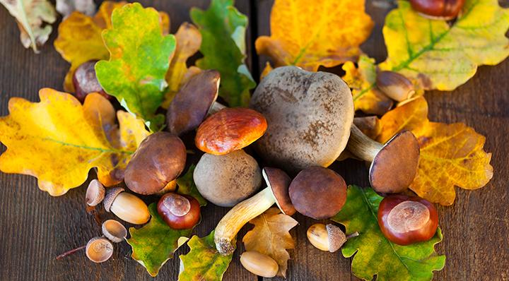 Des marrons, des châtaignes et des glands - DIY - Déco Mon plus bel Automne