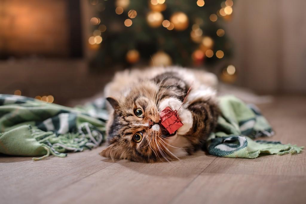 Playful Christmas cat - On adore - Les animaux à l'honneur pour Noël !