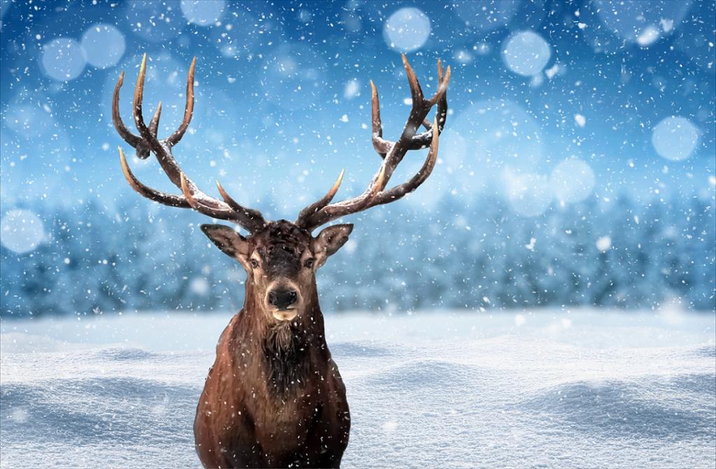 Renne en majesté - Les animaux à l'honneur pour Noël !