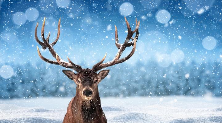 Renne en majesté - La Foir'Fouille - On adore - Les animaux à l'honneur pour Noël ! - Blog