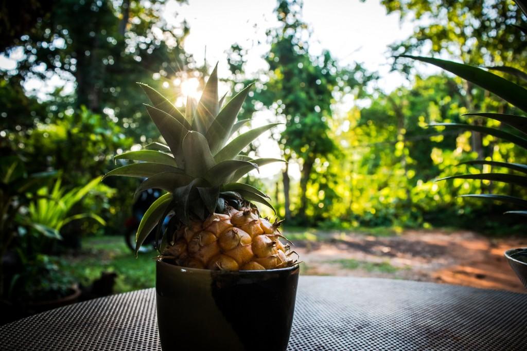 Foir'Fouille - DIY - faire pousser ses ananas maison - blog