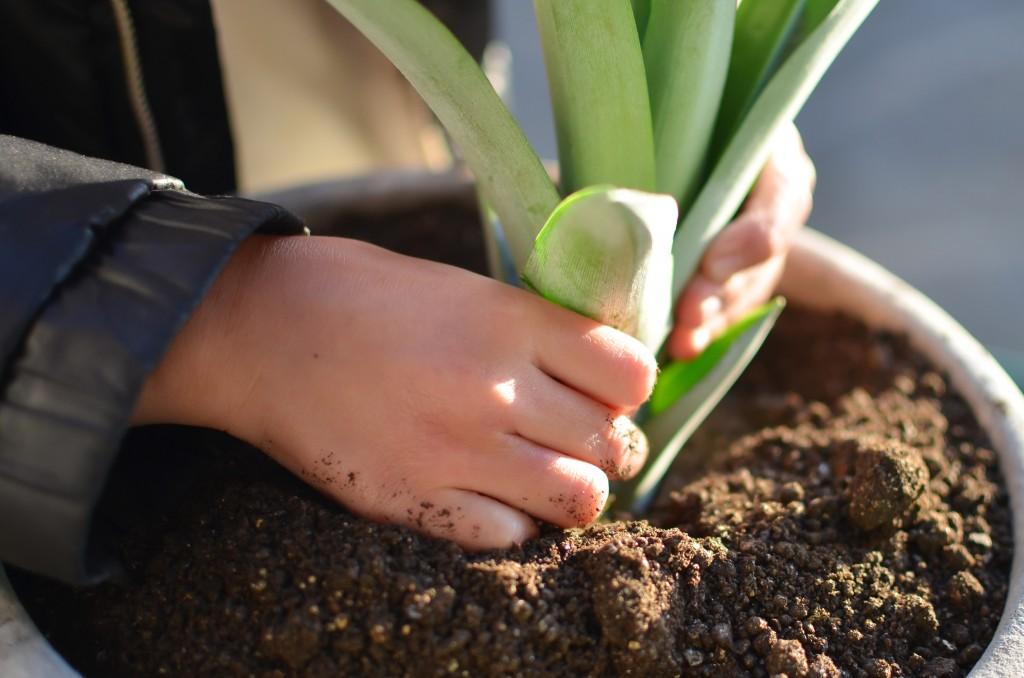 Foir'Fouille - DIY - faire pousser ses ananas maison - enfant plantant une couronne d ananas