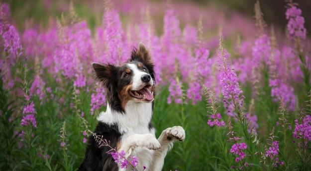 On adore : 10 faits étonnants sur les chiens