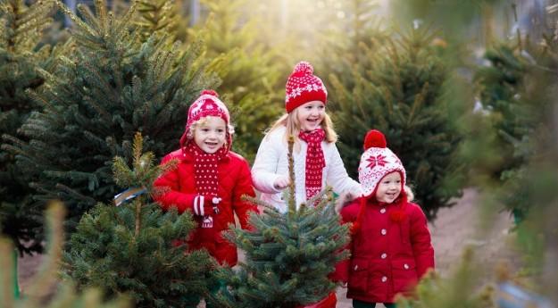 Guide d'achat : Comment choisir son sapin de Noël ?
