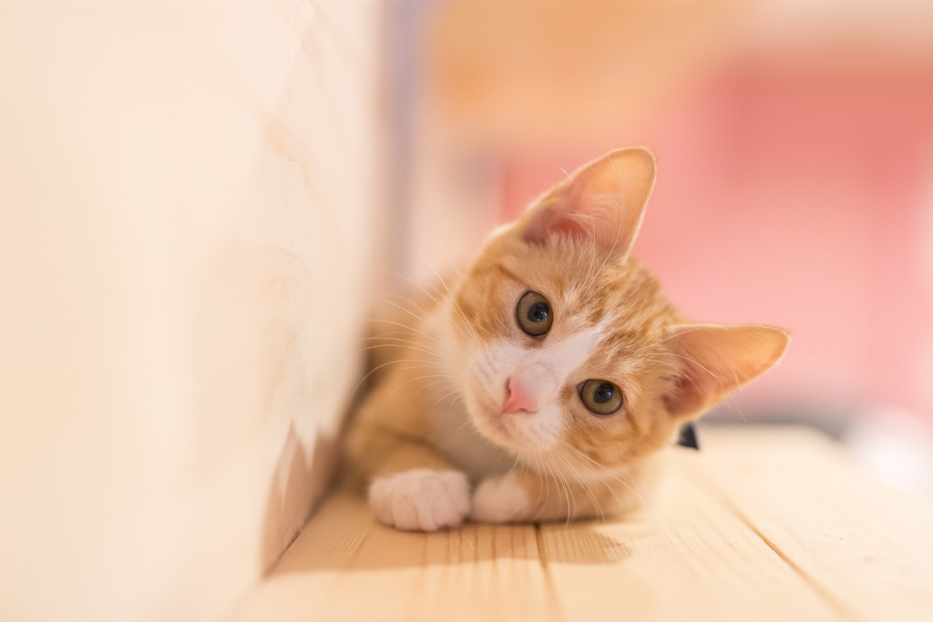 Les caresses que votre chat mérite
