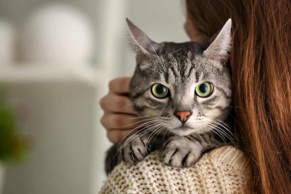 Quelles caresses les chats aiment-ils