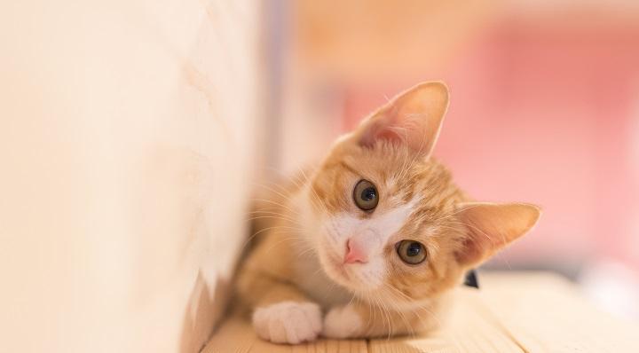 Astuces pour caresser un chat