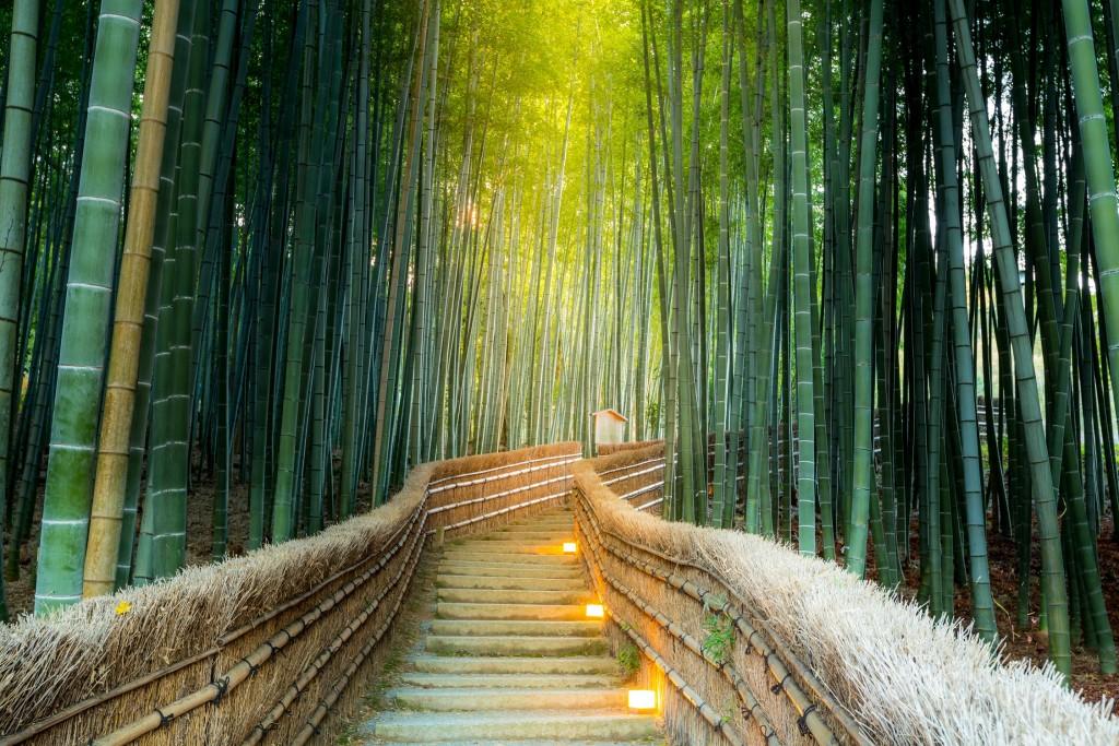forêt de bambou jardin japonais