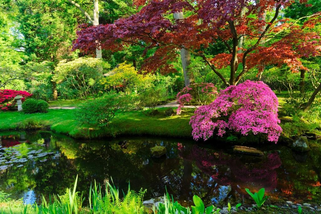 jardin japonais couleurs rouge vert et rose