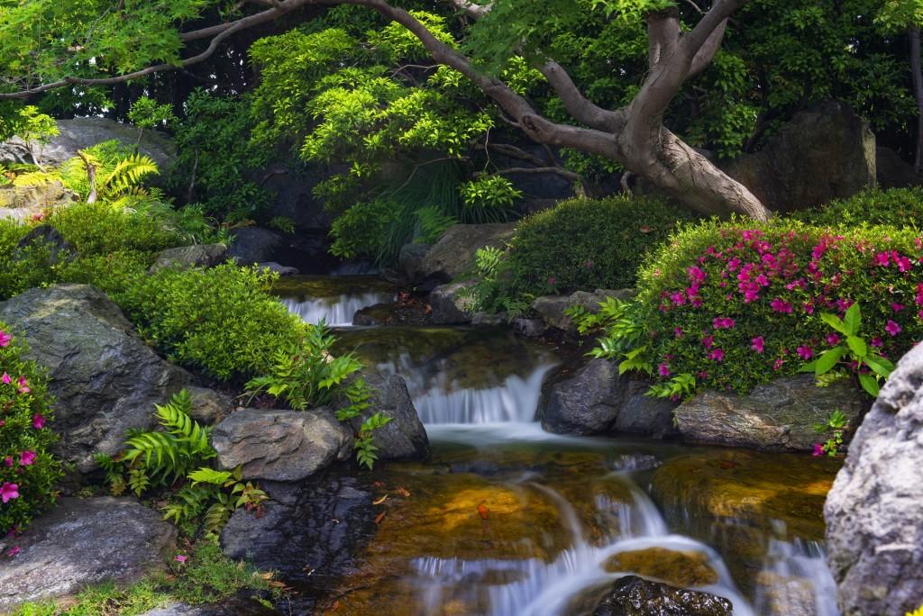cascade ruisseau jardin japonais