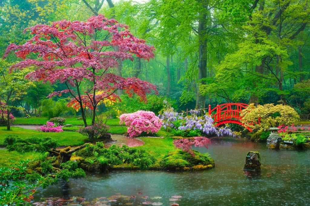 jardin japonais harmonie nature sous la pluie